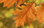 Fall Headache Season